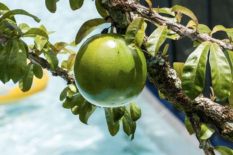 zumo-verde-desintoxicante-perder-peso